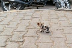 Hemlös fluffig liten grå kattunge med blåa ögon En ensam kattunge på väggen Royaltyfria Foton