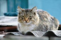 Hemlös grå katt på gatan royaltyfria bilder