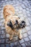 Hemlös hund Arkivbilder