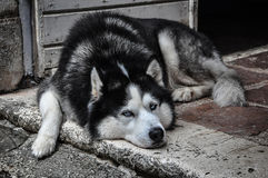 Hemlös hund på gatan Arkivbild