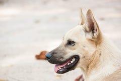 Hemlös hund på parkera Royaltyfri Foto