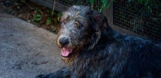Hemlös hund som lägger på gatan Royaltyfria Foton