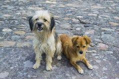 Hemlös hundkapplöpning på gatan royaltyfri fotografi