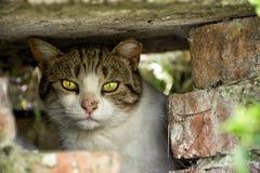 Hemlös katt för lös gata med härliga ögon i Burgas, Bulgarien Fotografering för Bildbyråer