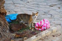 Hemlös katt i staden av Sousse Royaltyfri Bild