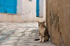 Hemlös katt i Tunisien fotografering för bildbyråer