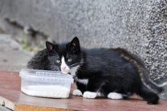 Hemlös katt med kattungen arkivfoto