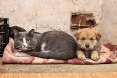 Hemlös katt och hund royaltyfri foto