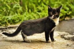 Hemlös kattunge arkivbild