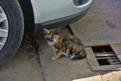 Hemlös kattunge arkivbilder