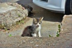 Hemlös kattunge arkivfoton