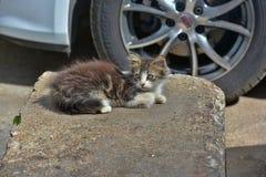 Hemlös kattunge royaltyfri foto
