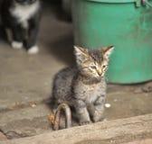 Hemlös kattunge på gatan royaltyfri fotografi