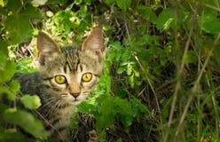 Hemlös ledsen kattunge Lös hungrig kattunge för gata som söker efter ägaren Royaltyfri Bild