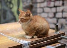 Hemlös ljust rödbrun kattunge royaltyfri fotografi