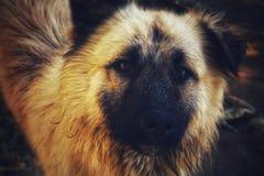 Hemlös lycklig hund royaltyfri fotografi