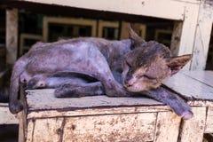hemlös mager sjuk kattsömn på wood stol arkivbild