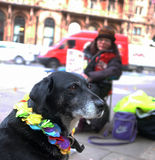 Hemlös och hennes hund Arkivfoton
