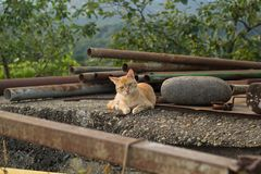 Hemlös röd katt som ligger på gatan Royaltyfri Bild