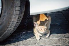 Hemlös röd strimmig kattkatt som ligger nära hjulet under bilen på en stadsgata royaltyfria bilder