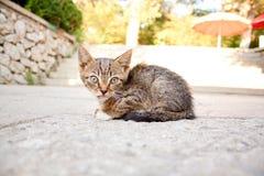 Hemlös sjuk kattunge Royaltyfri Bild
