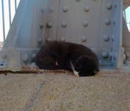 hemlös tagen fotogata för katt Arkivbilder