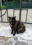 hemlös tagen fotogata för katt Arkivfoton