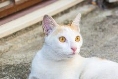 hemlös tagen fotogata för katt Arkivfoto