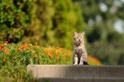 hemlös tagen fotogata för katt fotografering för bildbyråer