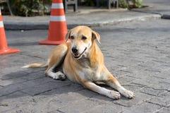 Hemlös thailändsk hund på vägsida royaltyfria bilder