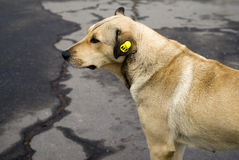 Hemlös tillfällig hund Arkivfoton