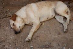 Hemlös tillfällig hund Arkivbild