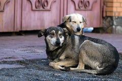 Hemlös tillfällig hundkapplöpning med att dingla öron arkivfoton