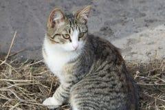 hemlösa katter arkivbild