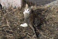 hemlösa katter royaltyfri bild