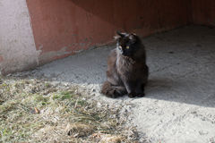 hemlösa katter arkivfoton