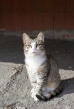 hemlösa katter royaltyfri foto
