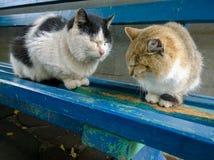 Hemlösa katter på en bänk Royaltyfri Foto
