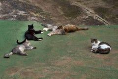 Hemlösa katter värms upp i solen arkivfoto