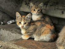 hemlösa kattungar royaltyfri fotografi