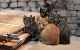 hemlösa kattungar royaltyfri bild