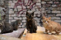 hemlösa kattungar fotografering för bildbyråer
