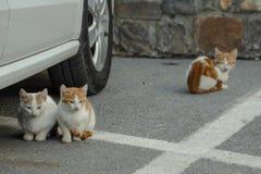Hemlösa kattungar i den parkera journalen royaltyfria foton