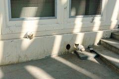 Hemlösa kattungar nära hålet i källaren på en stadsgata arkivfoto