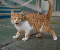 Hemlösa kattungeväsande ljud som är på utomhus arkivbilder
