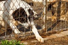 Hemlöst gammalt hundskydd fotografering för bildbyråer