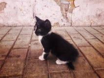 hemlöst kattungesammanträde på gatan royaltyfria bilder