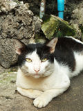 Hemlöst stirra för katt Arkivfoto