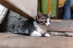 Heml?s kattunge, bara, katt, katter gata beh?v v?nner royaltyfria bilder