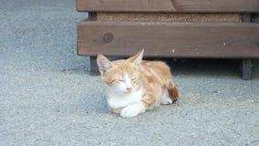 Heml?s r?d kattunge p? gatan Gullig kattframsida 4K arkivfilmer